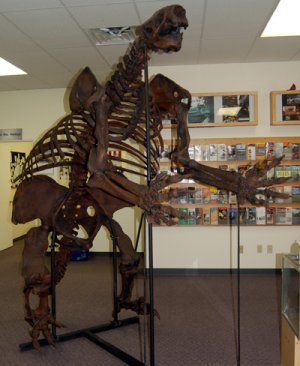 Jefferson Ground Sloth skeleton