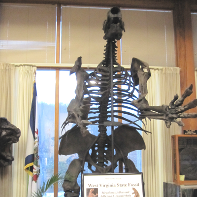 Megalonyx jeffersonii