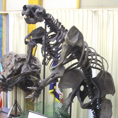 dinosaur replica images